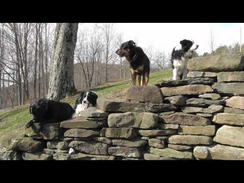 """How Frieda inspired a book: """"Meet The Dogs Of Bedlam Farm"""""""