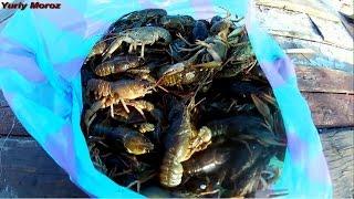 Ловля раков в Апреле  Catching Crayfish