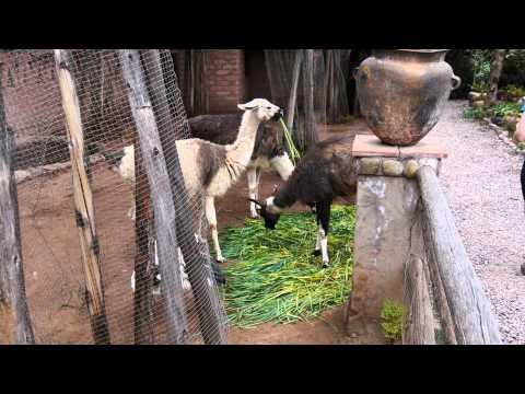 Peru Highlights in 4K