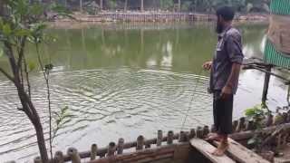 Catch a fish, Bangladeshi style. मछली पकड़ने, बांग्लादेशी शैली.