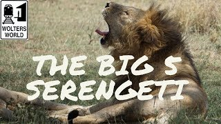 """Safari Travel - How to See """"The Big 5"""" in the Serengeti National Park"""