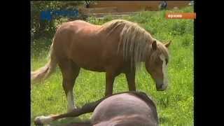 лошадь убила девочку