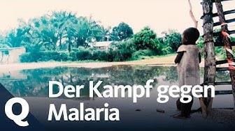Tückische Malaria: Kampf gegen Mücke und Parasit | Quarks