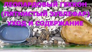 Леопардовый геккон (Пятнистый эублефар) - уход и содержание