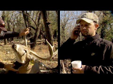 Michael Waddell's Radio Collared Buck