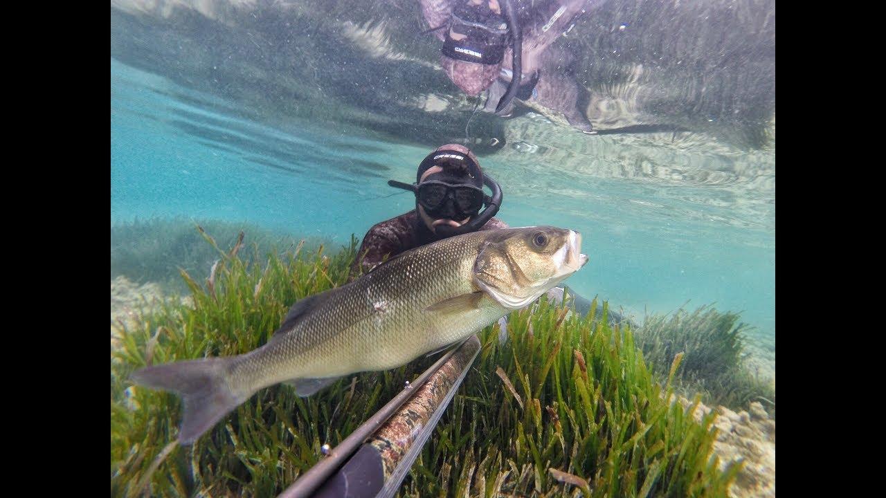 pesca sub spigola 20 kg
