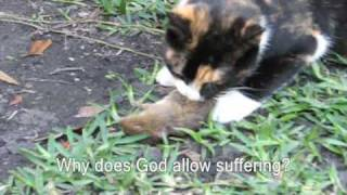 Our Cats Kill a Mouse and Bird, Part 1
