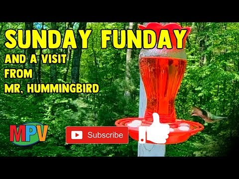 Sunday Funday and a Visit from Mr. Hummingbird (5.26.19) #1255