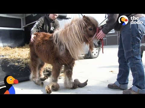 Neglected Pony Hooves Were So Long He Couldn't Walk | The Do