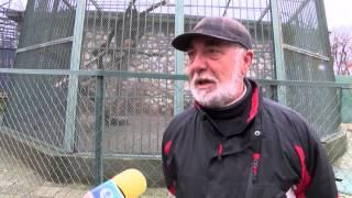 Dvoyka risove e nay- novata atrakciya v haskovskiya zoopark