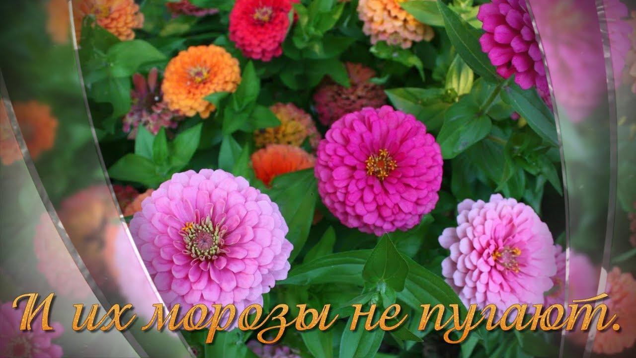 Осенние цветы песня