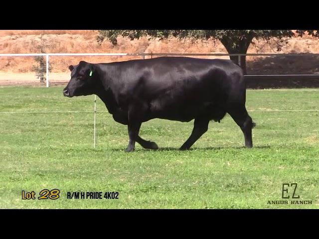 EZ Angus Ranch Lot 28