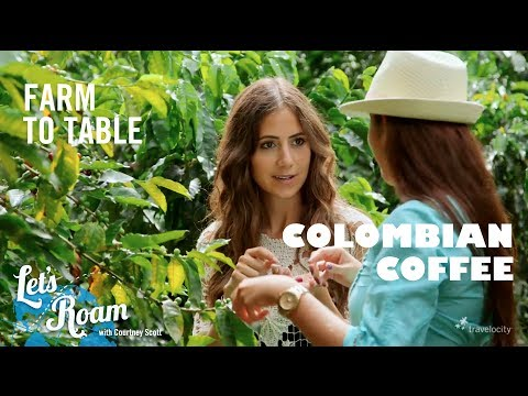 Colombian Coffee From Farm to Table - Let's Roam Colombia with Avianca