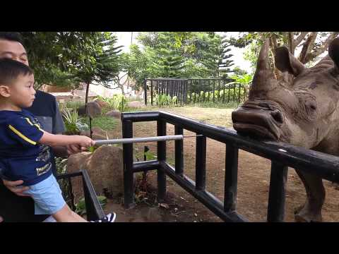 Batu Zoo Rhino Feeding
