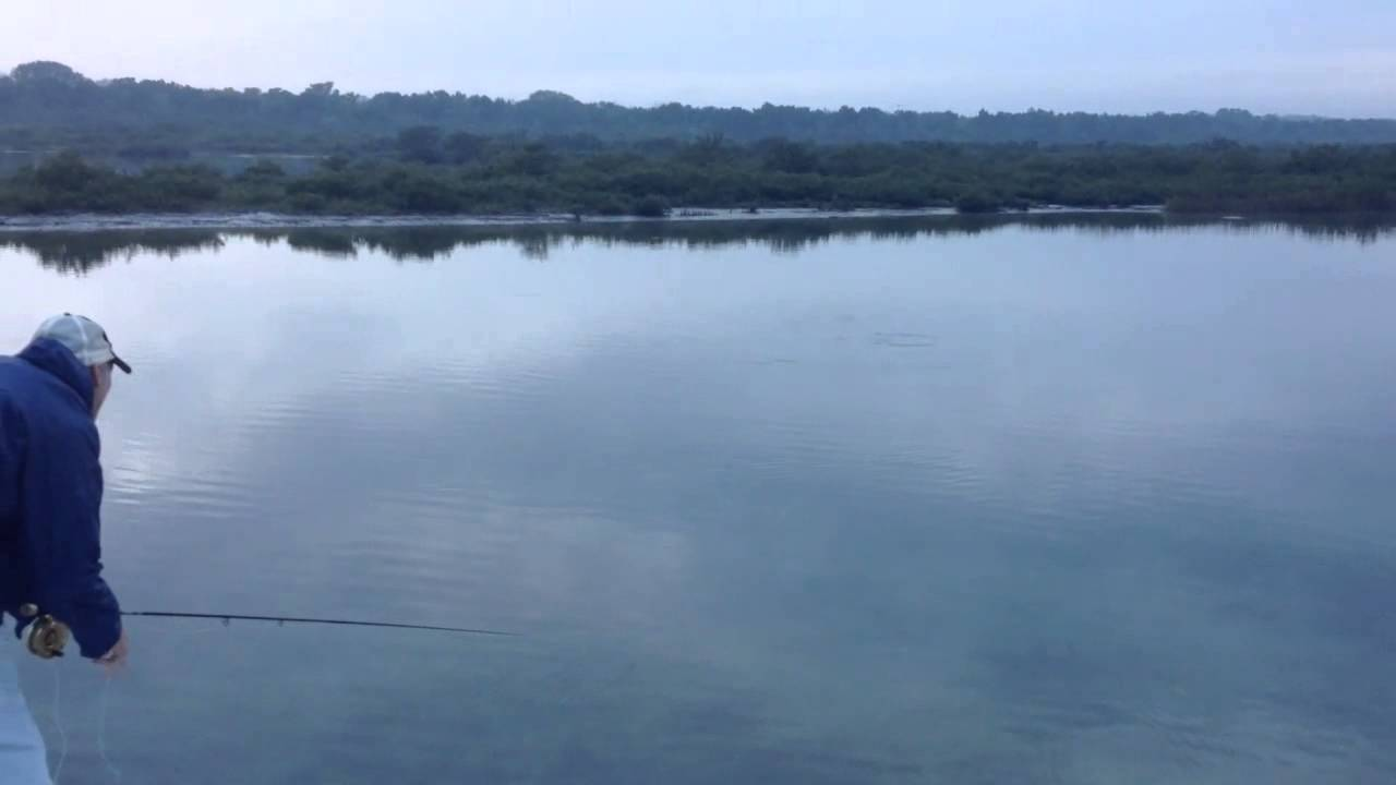 Mosquito lagoon fly fishing guide right in sight charters for Mosquito lagoon fishing guides