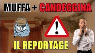 [REPORTAGE] Cosa succede se usi la CANDEGGINA per pulire la MUFFA da condensa