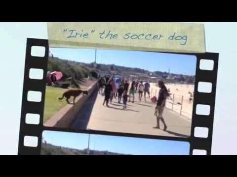 irie the soccer dog skills  bondi beach @dogfitsydney