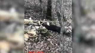 В Анапе была обнаружена свалка мертвых собак