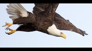Southwest Florida Eagle Cam - Pond View thumbnail