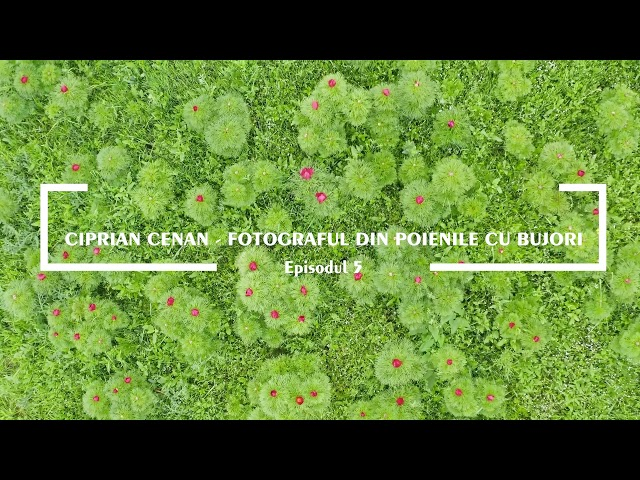 (TEASER) Photocoolt - ep. 5 - Ciprian Cenan, fotograful din poienile cu bujori