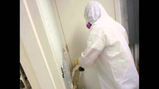 Memphis Commercial Mold Removal