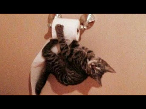 FUNNY ANIMAL COMPILATION - TO HARD to hold your LAUGH
