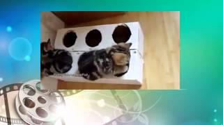 Коробка, полная котят. Смешные коты. Funny Cat Videos