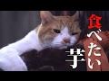 ドラマ「猫忍」第9話予告