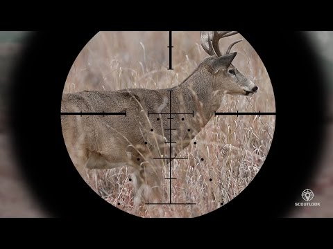 Best Long-Range Scope for 6.5 Creedmoor