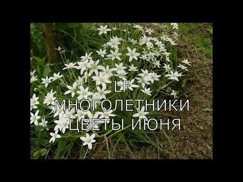 Садовые цветы июня. Многолетники. Видео обзор 16 растений (1 часть).