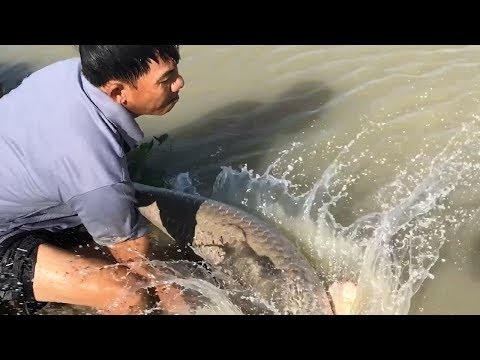 Unbelievable Cast Net Fishing River Monsters Arapaima 50 KG