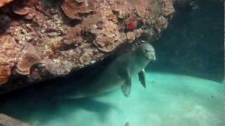 Hawaiian monk seal @ Black Rock, Maui