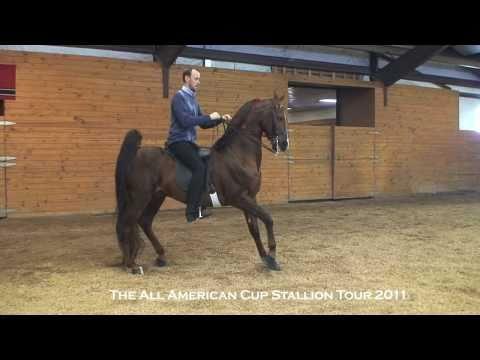 WC CH Call Me Ringo - American Saddlebred Stallion