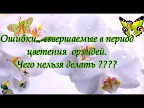 Наши ошибки  в период цветения орхидей. Чего нельзя и что можно делать?