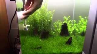Poda, limpieza y tips Mantenimiento de gambario paisajismos(mantenimiento de acuarios)