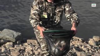 сорочинск и вагоны рыбы
