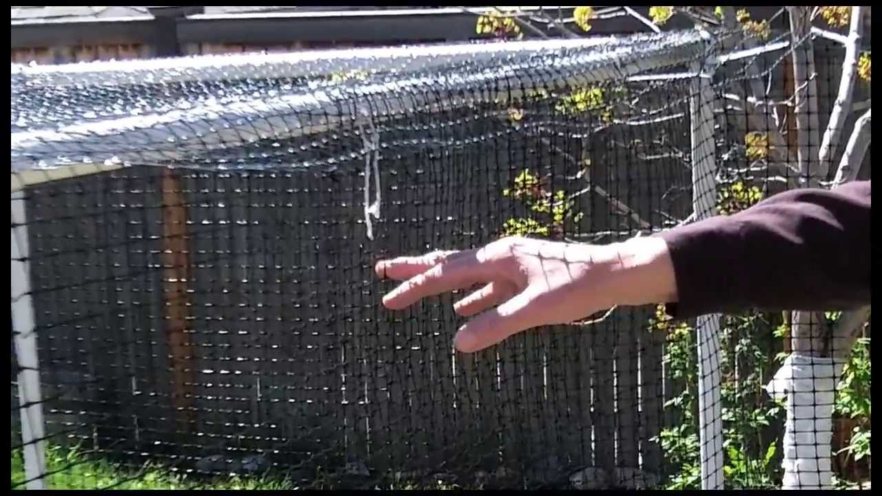 Protecting Tomatoes From Squirrels Youtube