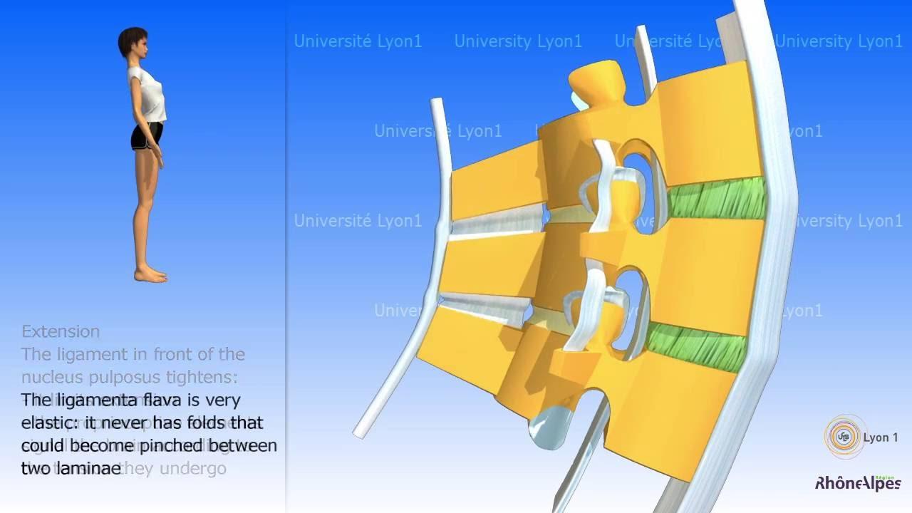 Krónikus boka ligamentum károsodás - Saját menü
