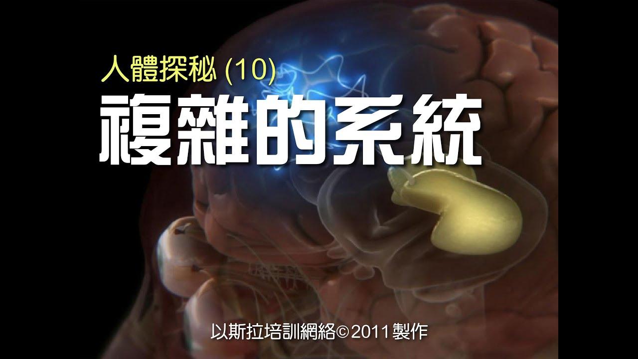 人體探秘(10) 複雜的系統 (粵語) - YouTube