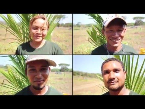 Timber and Coconut Discovery Tour - Precious Timber