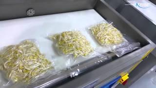 콩나물 2kg 진공포장용 AZC-090 챔버식 진공포장…