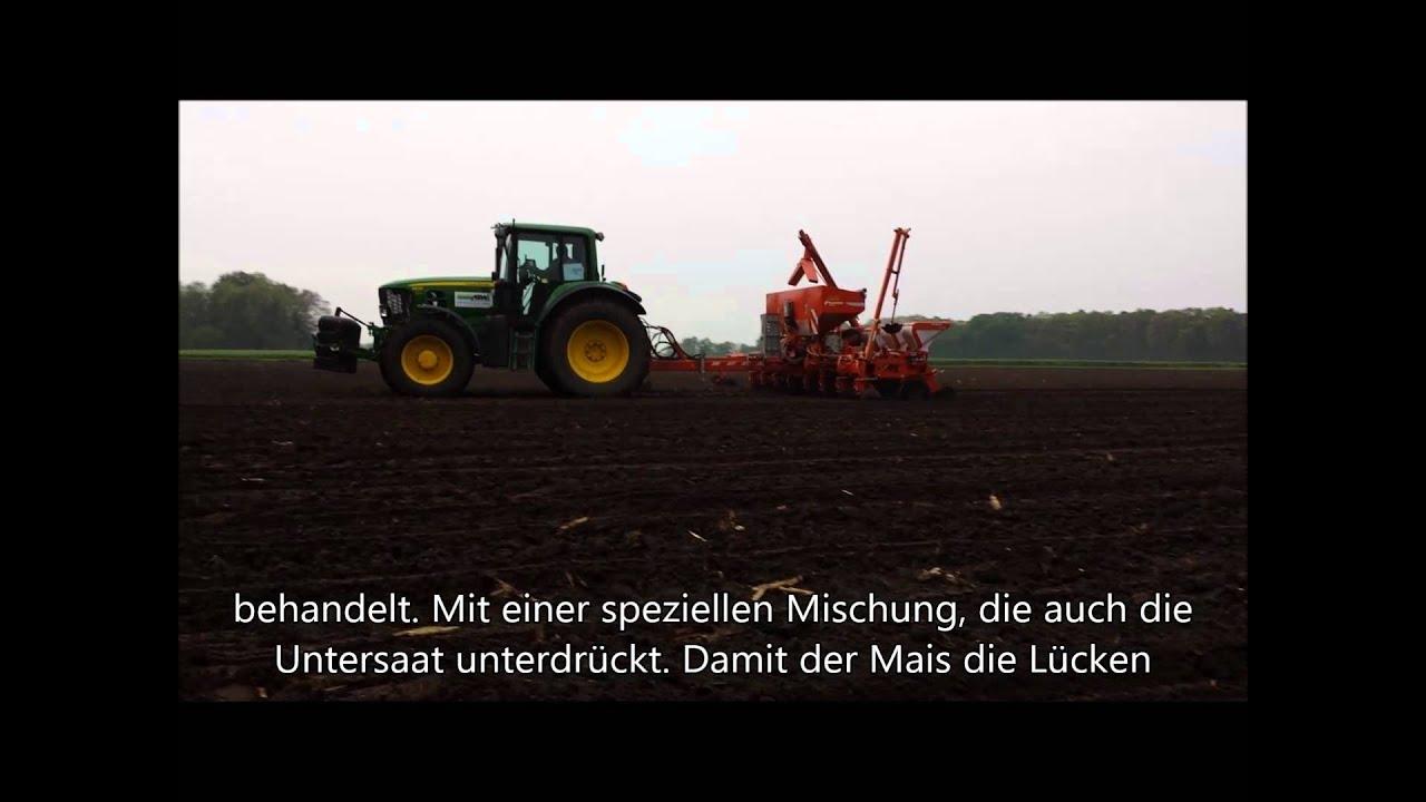 Gesät  So werden Dumka-HS-Mais und Proterra-Rohrschwingel-Untersaat gesät ...