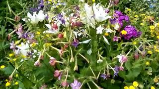 Цветы в огороде.