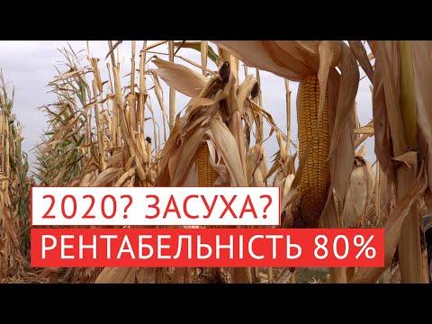 Органічне добриво - ефективність навіть в умовах посухи