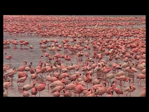 Safari am Lake Nakuru mit Sunworld Safaris