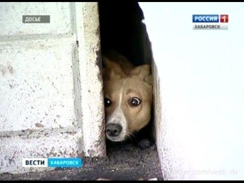 Как люди освободили собаку, три года жившую в щели между зданиями