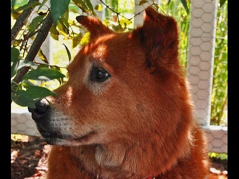 """""""My Old Dog"""" (best song in honor of the passing of man's best friend) Download"""
