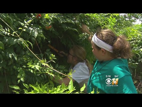 Students Volunteer To Help Others