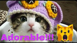 🙀You won't believe these cute cats and kittens - Funny Cat Videos/Compilation