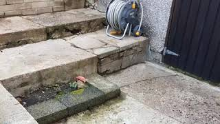 Gambar cover Cladding Old Steps with Tobermore Standard Grey By Modern Landscapes
